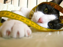 Cat measuring Tape